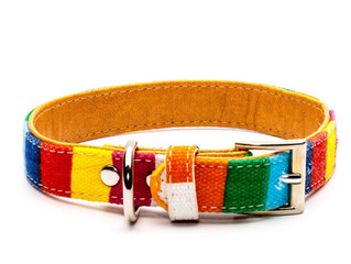 How To Choose A Dog Collar
