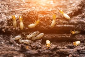 Termite-Control-in-Bangalore