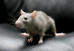 rodent-control-methods.jpg