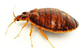 7 Best Ways to get rid of Bed Bugs In Your Home Today !