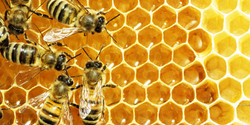 Bees-for-Test
