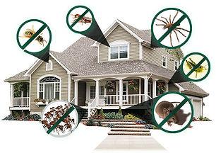 residential-pest-control.jpg