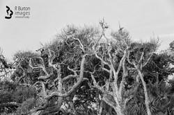 Tangled Treetops