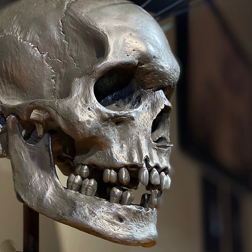 Metal Powdered Cold Cast Resin Skull Replica
