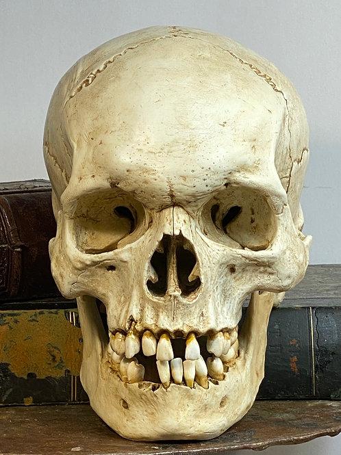 Paint Wash of Skull Replica