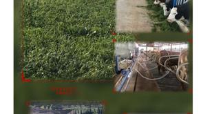%100 Doğal Kendi Yemini Üreten Tarımsal Faaliyet