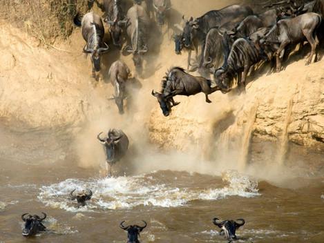 Masai Mara – park, který musíte navštívit