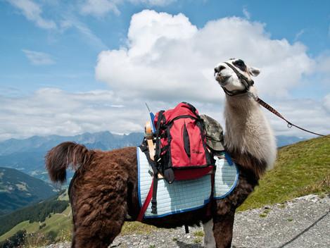 Do Rakouska za klidem i exotikou