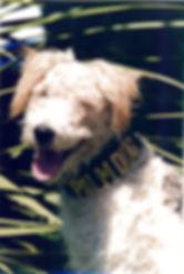 MuttPD2001.10.jpg