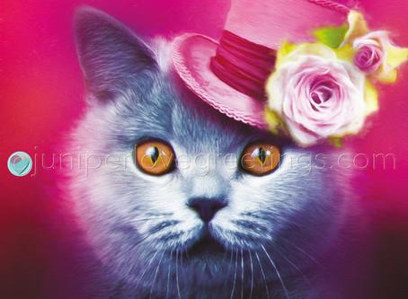 British Shorthair Cat Card - New Birthday Card Design for April!