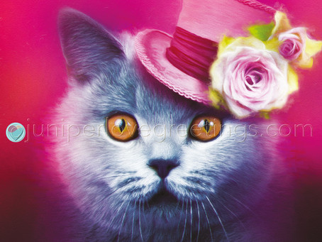British Shorthair Cat Card - New Birthday Card Design for April!