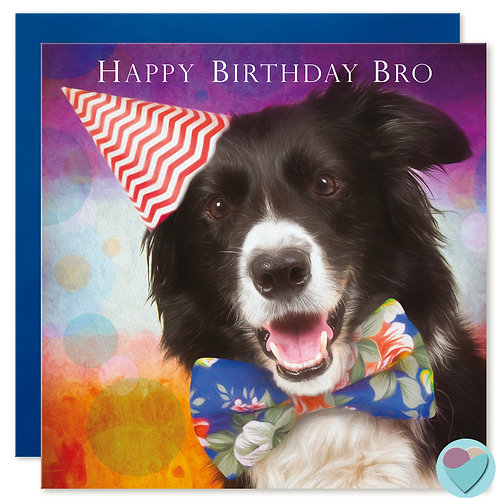 Border Collie BROTHER Birthday Card 'HAPPY BIRTHDAY BRO'