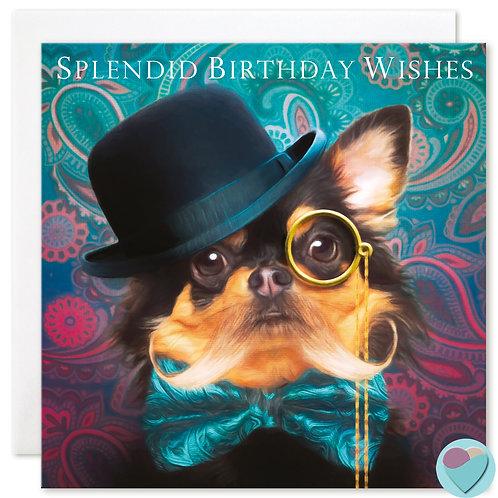 Chihuahua Birthday Card 'SPLENDID BIRTHDAY WISHES'