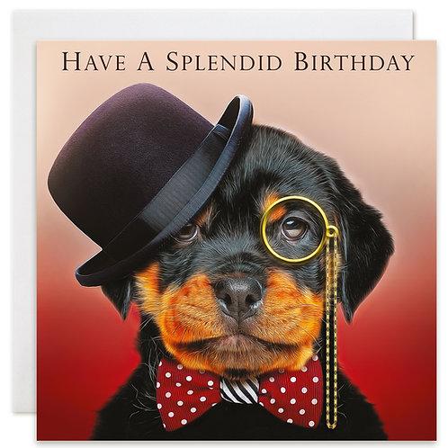 Rottweiler Birthday Card 'HAVE A SPLENDID BIRTHDAY'