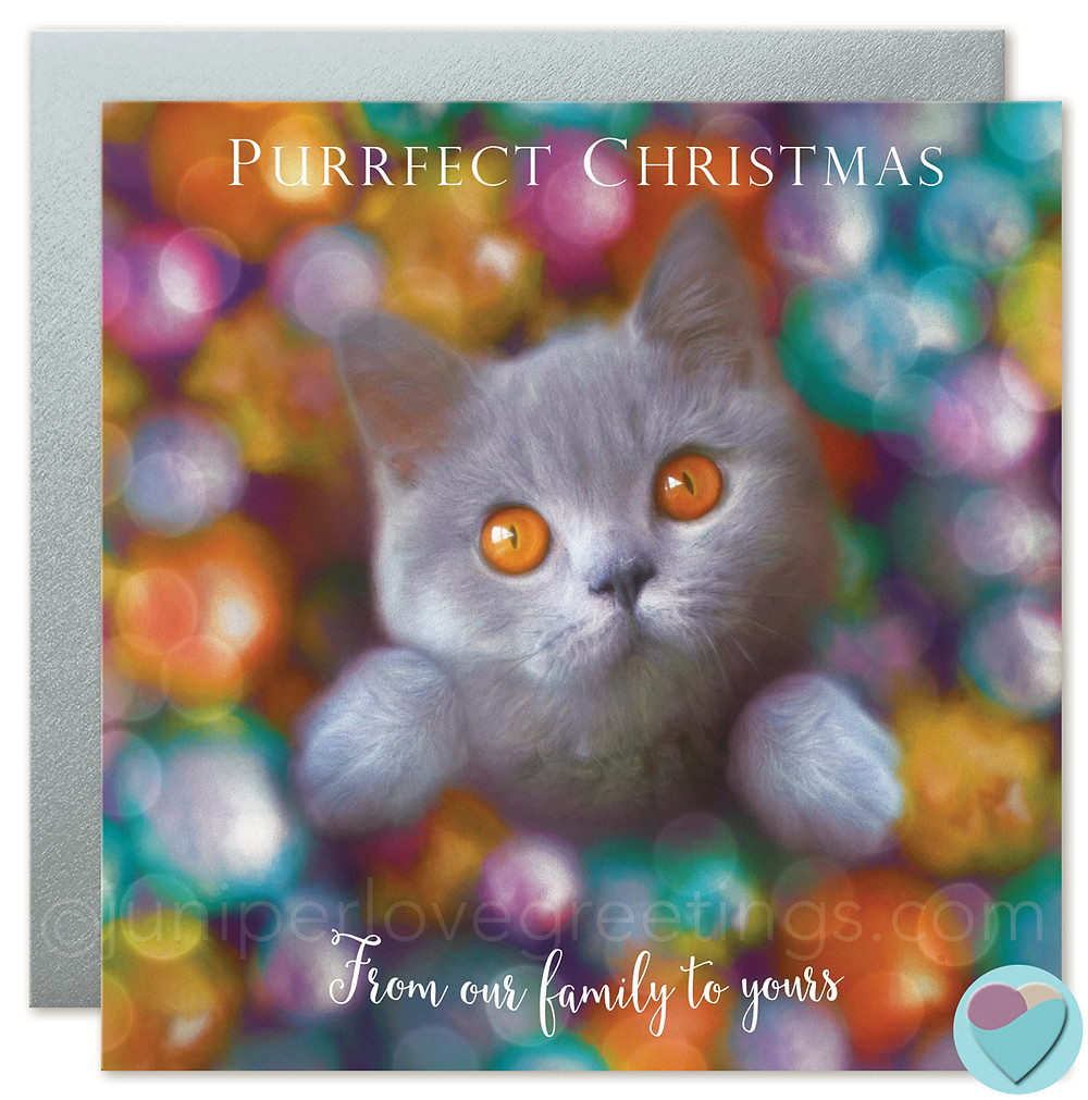 british shorthair cat cards, greetings cards for cat lovers, british blue kitten card, british shorthair cat breeder uk, buy cards online, uk greetings cards
