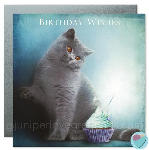 British Blue Shorthair Cat Card