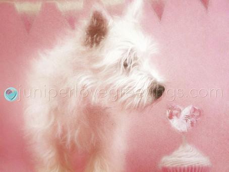 Westie Birthday Cards