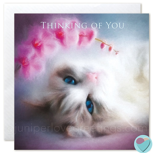 Ragdoll Cat Greeting Card 'THINKING OF YOU'