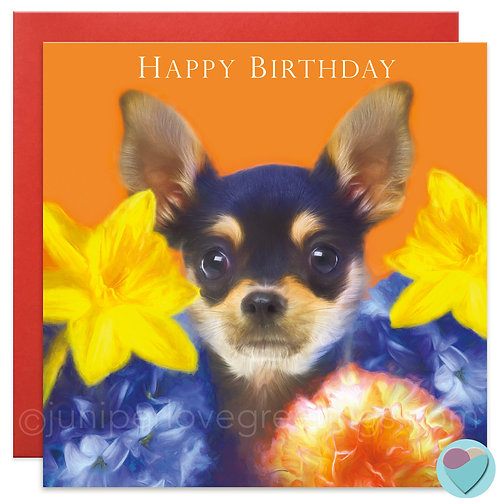 Chihuahua Puppy Birthday Card 'HAPPY BIRTHDAY'