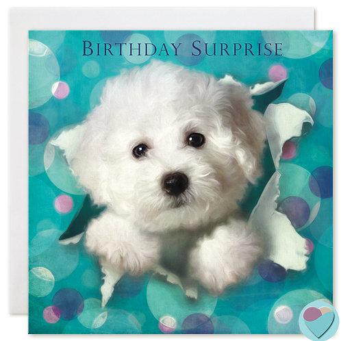 Bichon Frise Puppy Birthday Card 'BIRTHDAY SURPRISE'
