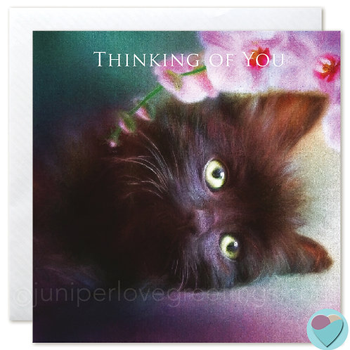 Fluffy Black Kitten Card 'THINKING OF YOU'