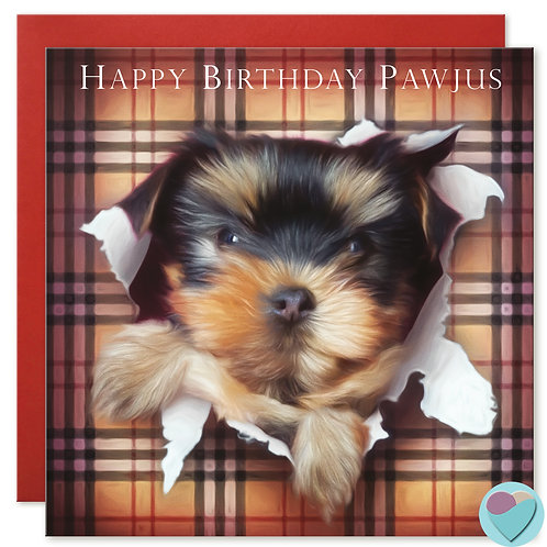 Yorkshire Terrier Birthday Card 'HAPPY BIRTHDAY PAWJUS'
