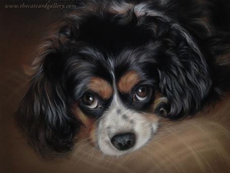 Cavalier Pet Portrait Jade - finished!