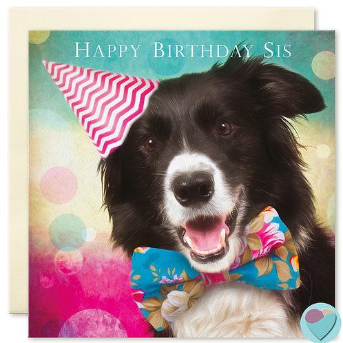 Border Collie Sister Birthday Card 'HAPPY BIRTHDAY SIS'