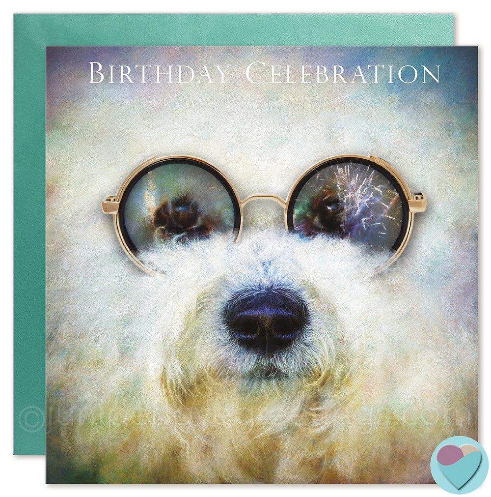 Birthday card for bichon frise lovers, buy online uk greetings cards, easy seller, eBay seller, juniperlovegreeting