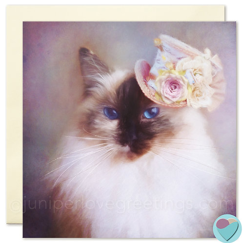 Ragdoll Cat Card UK seller BLANK Art Print