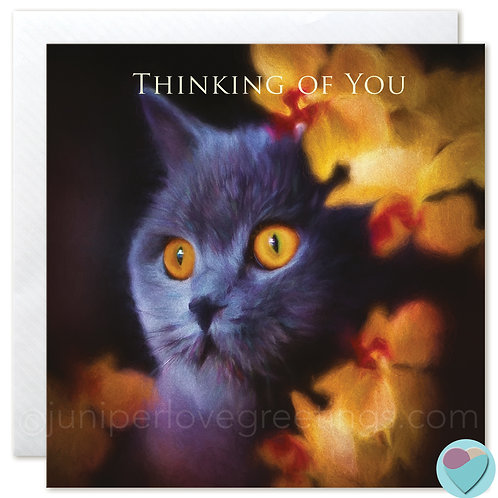 British Shorthair Cat Greeting Card 'THINKING OF YOU'