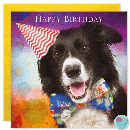 Border Collie Birthday Card 'HAPPY BIRTHDAY'