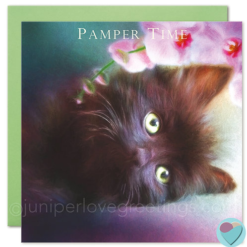 Fluffy Black Kitten Birthday Card 'PAMPER TIME'