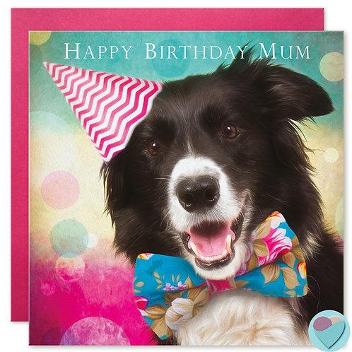 Border Collie MUM Birthday Card 'HAPPY BIRTHDAY MUM'