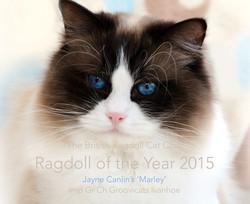 TBRCC Ragdoll of the Year 2015