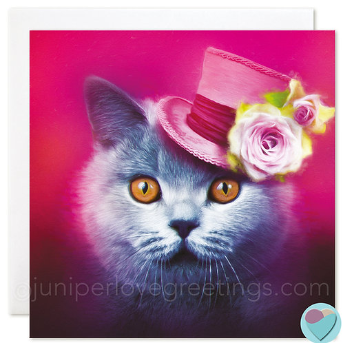 BLANK Cat Card British Blue Shorthair - For Any Occasion