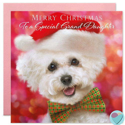 Bichon Frise Christmas Card 'MERRY CHRISTMAS To a Special Grand Daughter