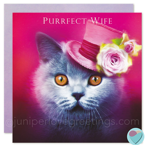 Wife Birthday Card British Blue Shorthair Cat 'PURRFECT WIFE'