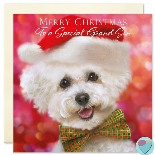 Grandson Bichon Frise Christmas Card 'MERRY CHRISTMAS To A Special Grandson