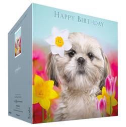 Shih-Tzu dog birthday card