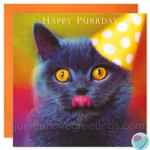 British Shorthair Cat Birthday Card ' HAPPY PURRDAY'