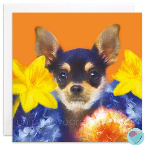 Chihuahua Blank Card