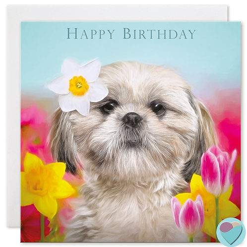 Shih-Tzu Birthday Card 'HAPPY BIRTHDAY'