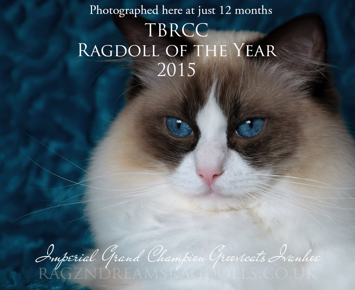 TBRCC Ragdoll of the Year 2015