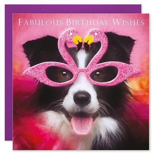Border Collie Birthday Card 'FABULOUS BIRTHDAY WISHES'