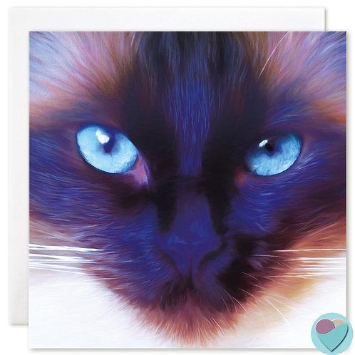 Cat BLANK Art Card - Ragdoll Cat