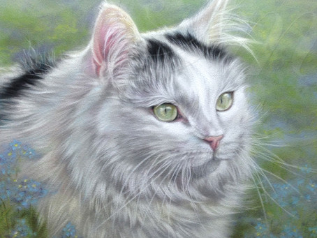 Cat Pet Portrait 'Flash' completed