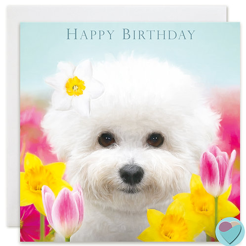 Bichon Frise Birthday Card 'HAPPY BIRTHDAY'