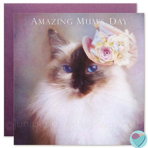 Ragdoll Cat Card MUM Birthday OR Mother's Day Card 'AMAZING MUM'S DAY'