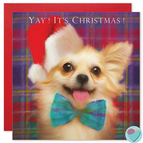 Chihuahua Christmas Card 'YAY IT'S CHRISTMAS'